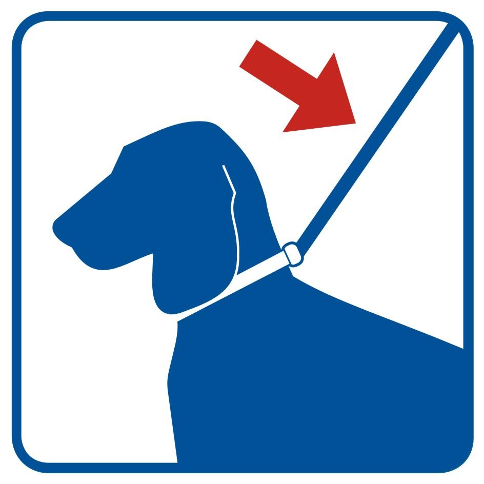 Prowadź psa na smyczy