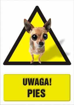 UWAGA! Pies 2
