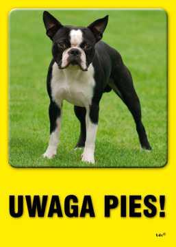 UWAGA pies!
