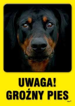 UWAGA! Groźny pies 4
