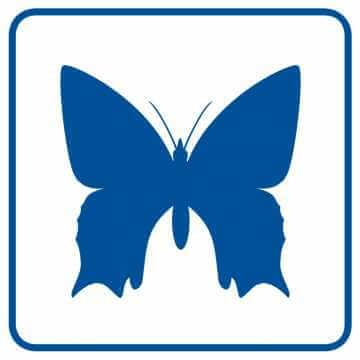 Rzadkie okazy motyli